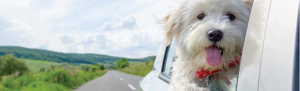 White Puppy Car